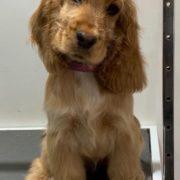 Dog Grooming Westerham